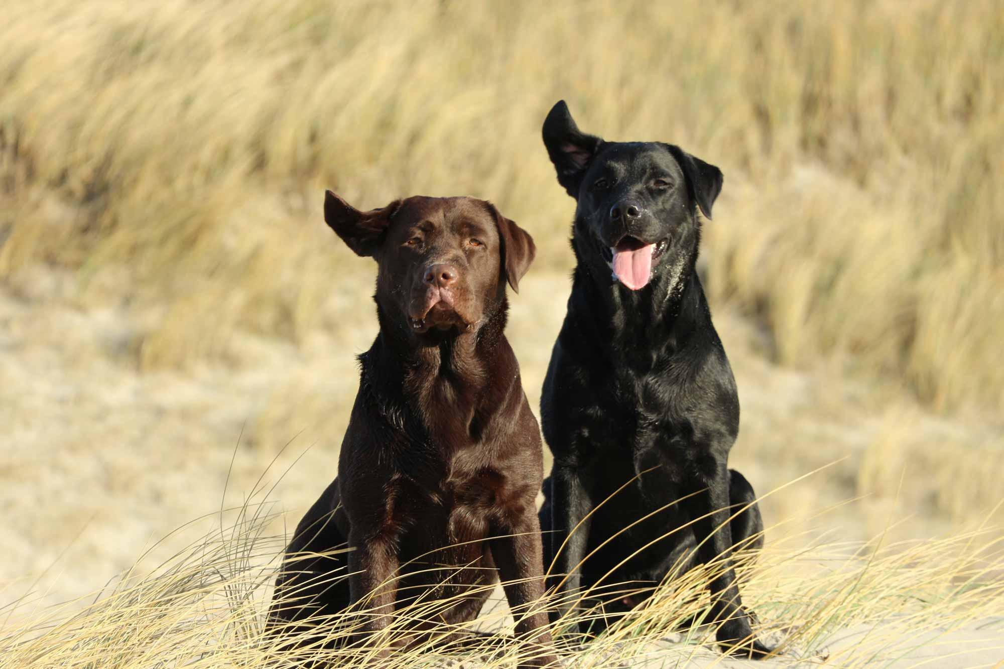 Unsere Hündinnen: Birla und Smilla